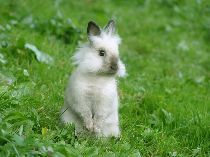 baby animal wallpaper. Here is a Bunny Wallpaper just
